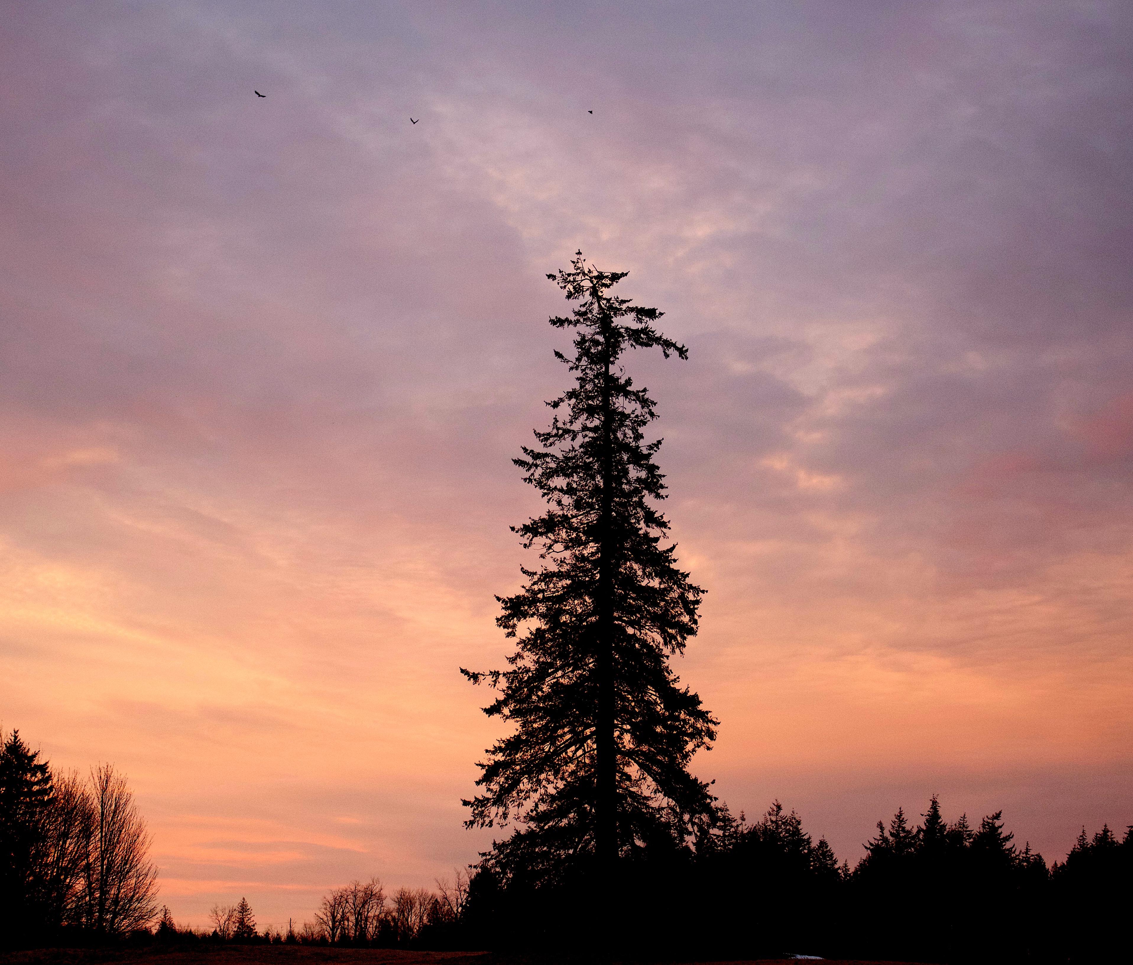 sunrise2141711