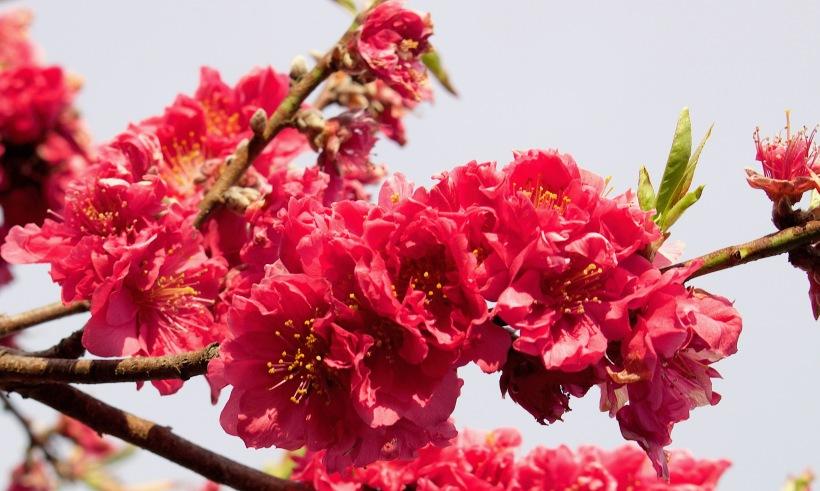 pinkdouble