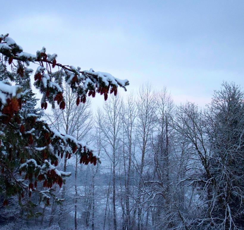 snowyfir