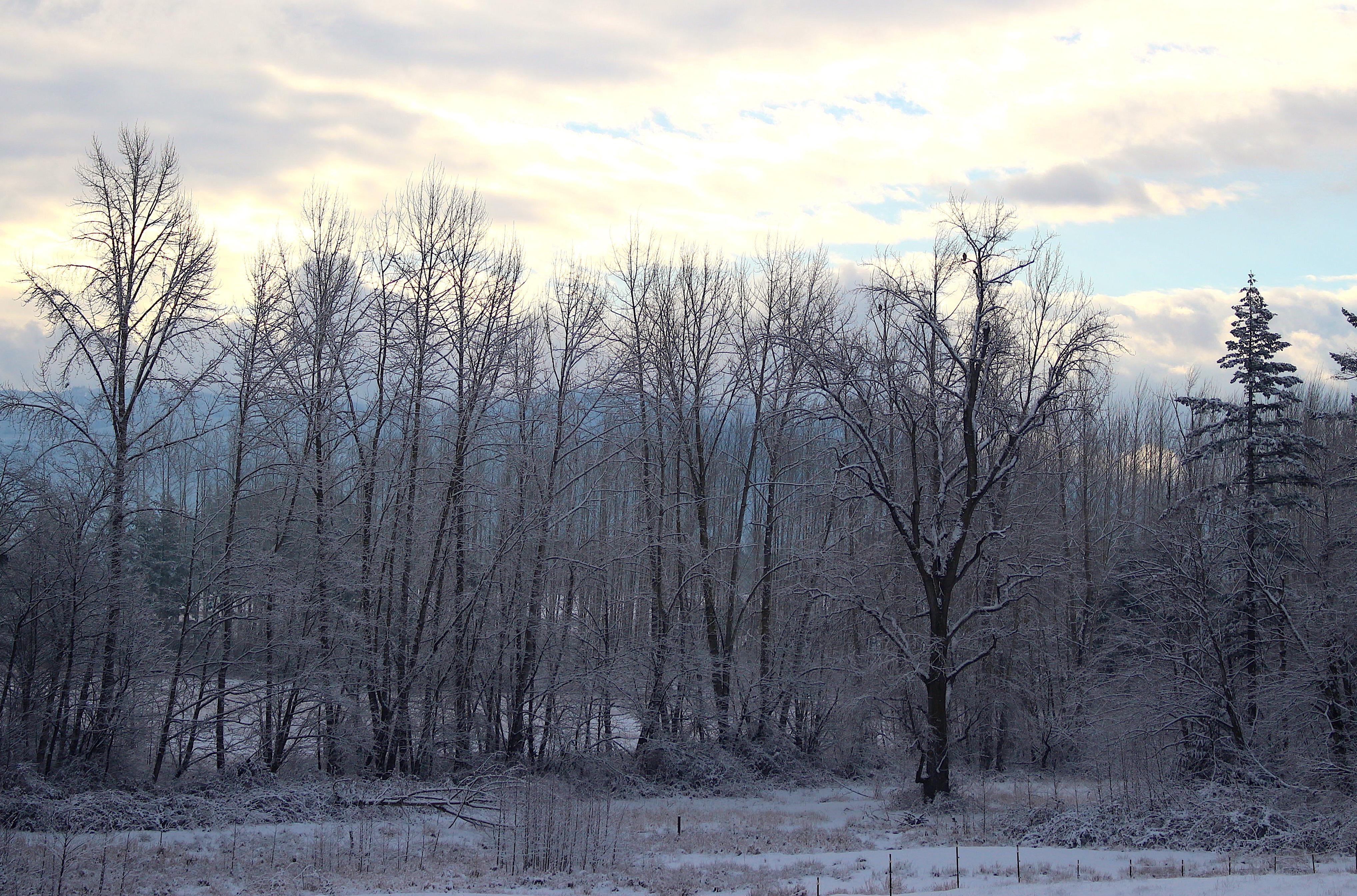 snowymorn2