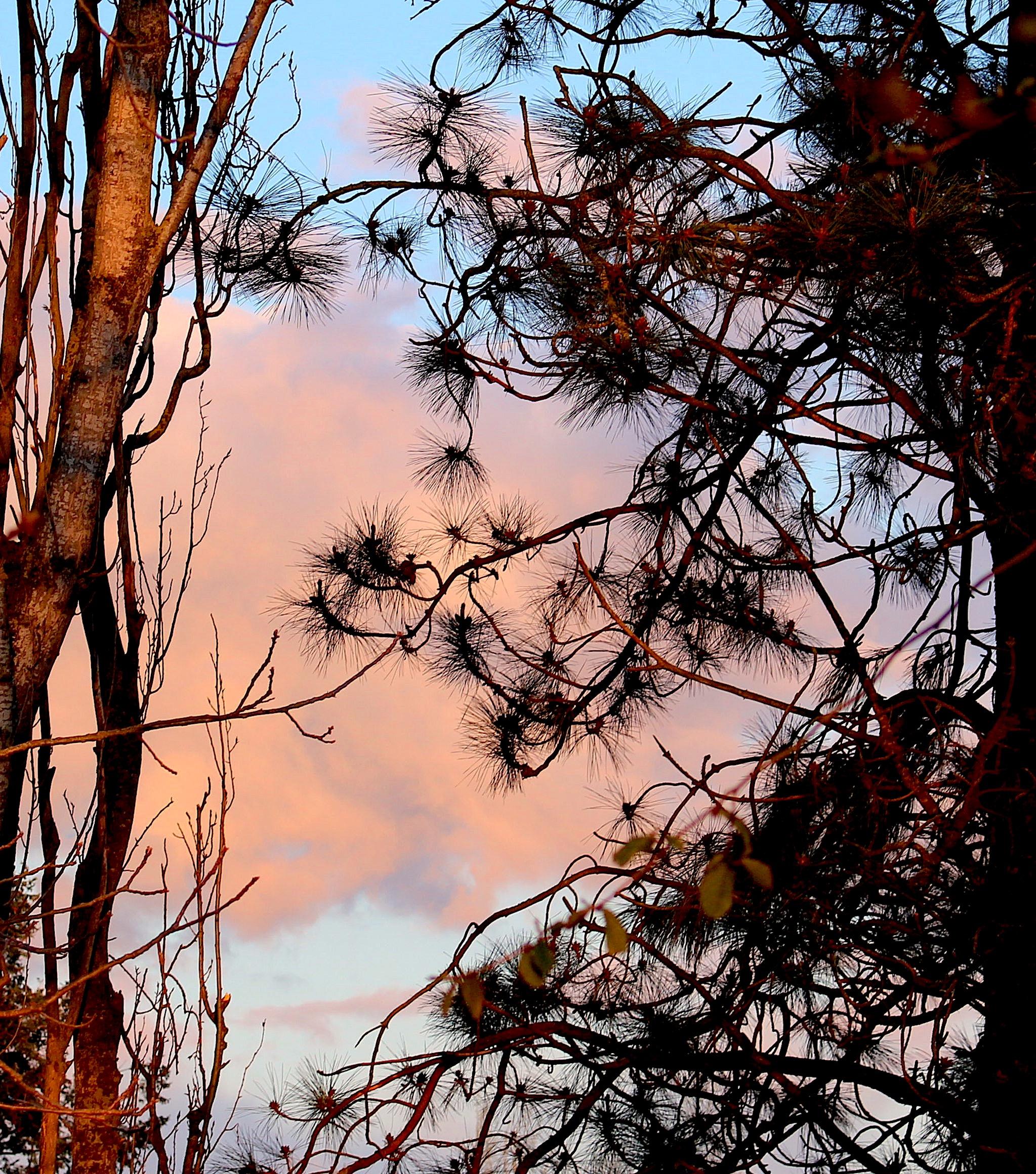 aprileveningtrees