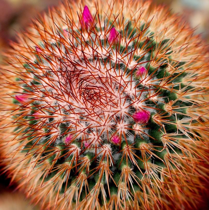 cacti2