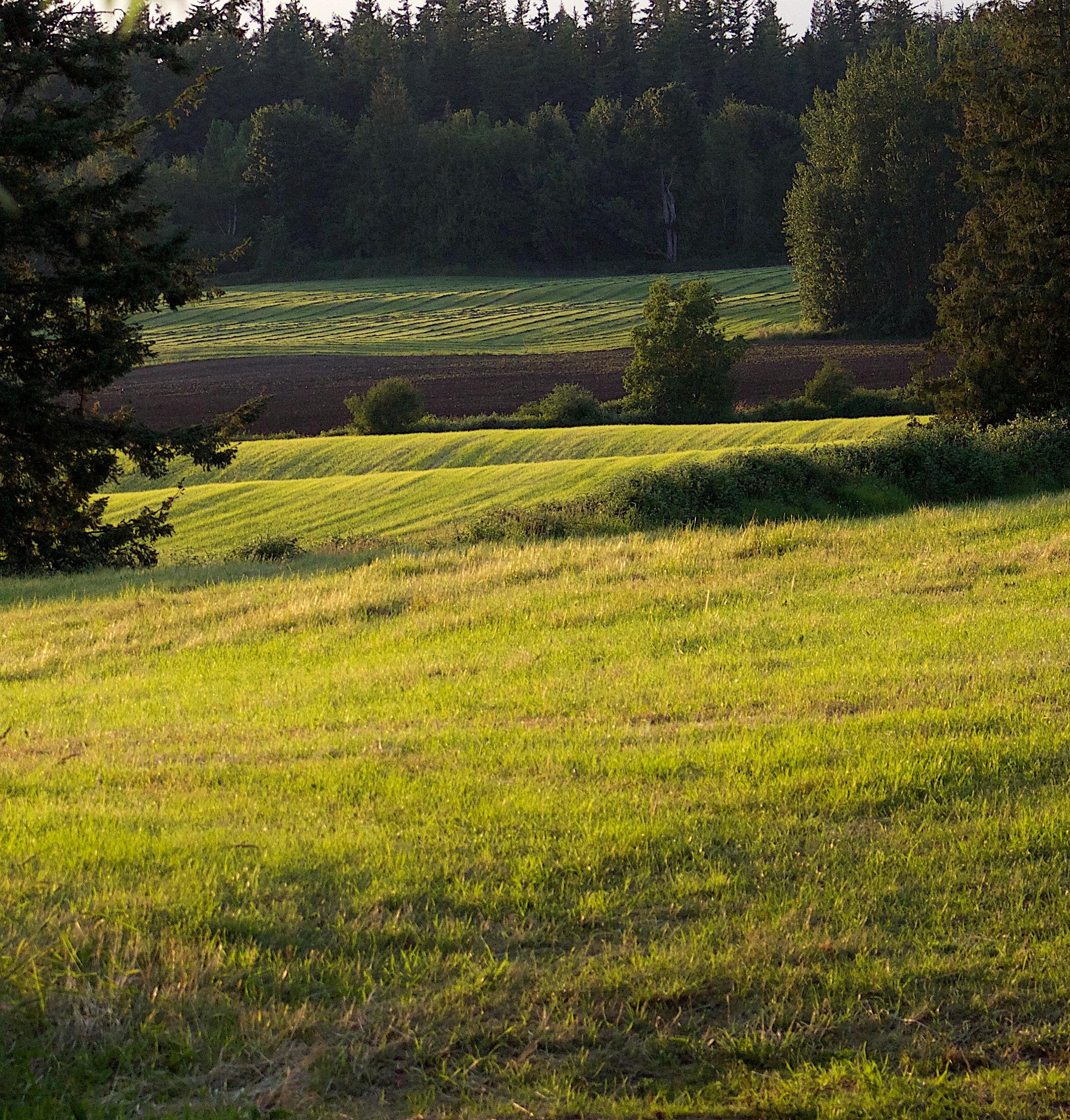 rollingfield