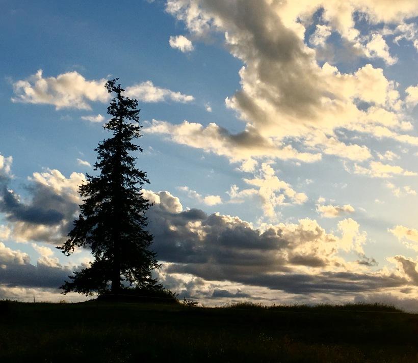 treesky2