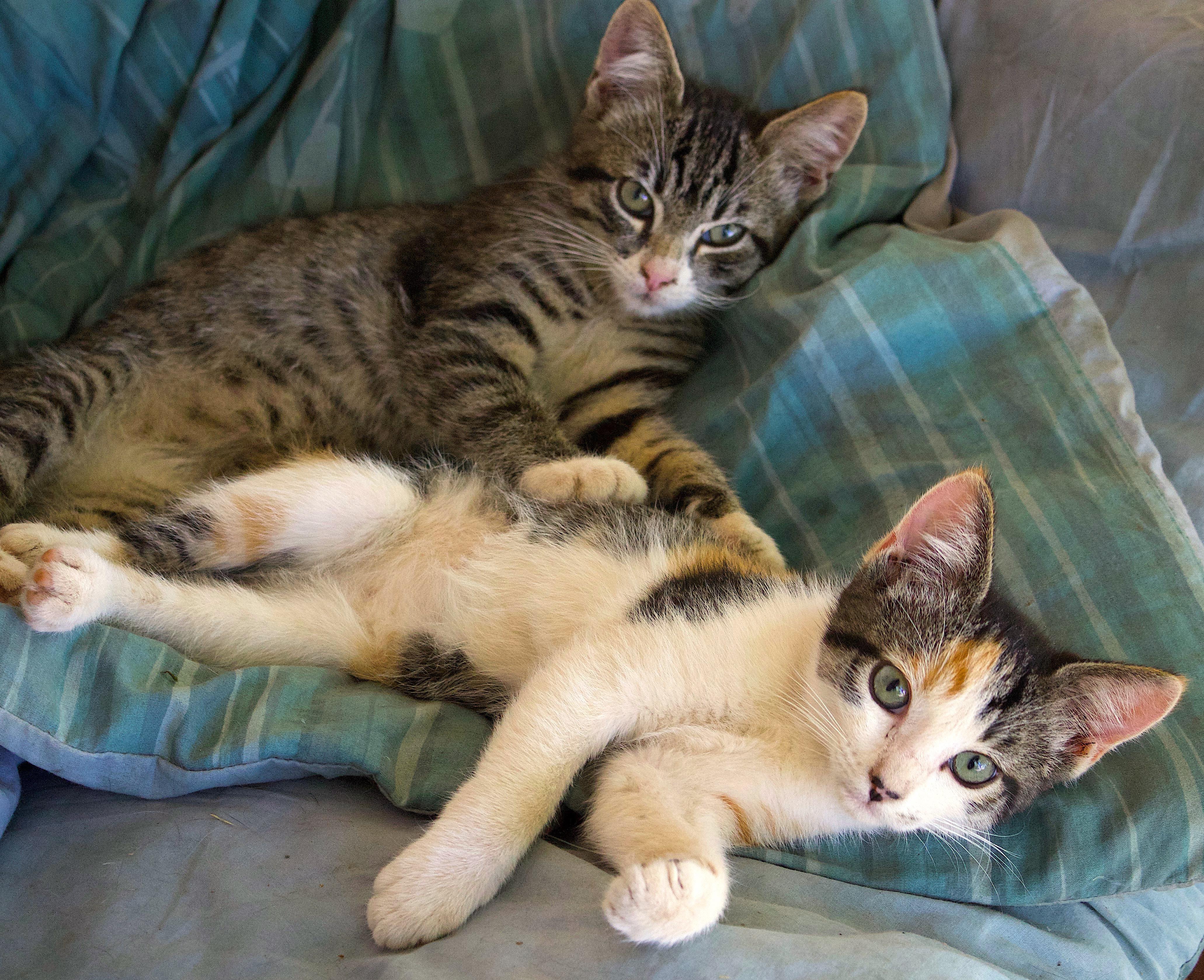 kittens727171