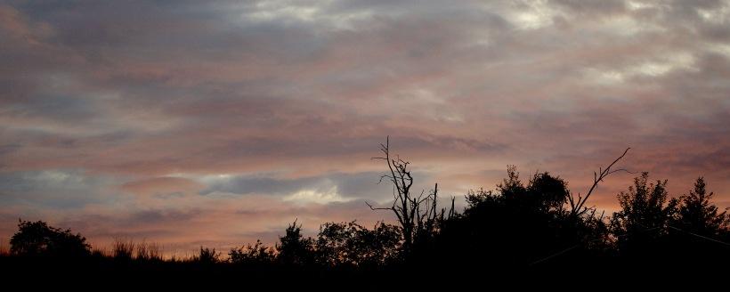 sunset830176