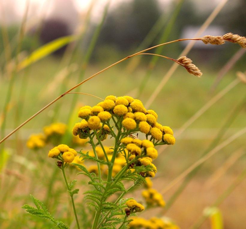 yellowmorning2