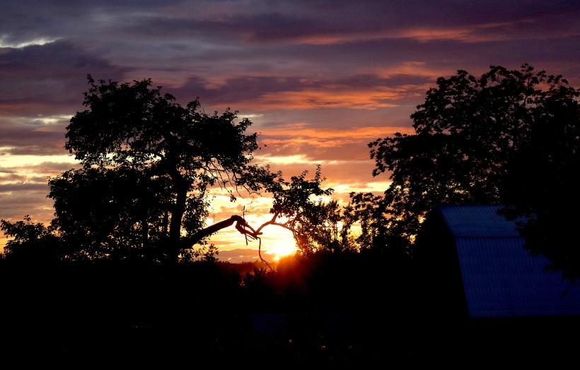 sunset830175