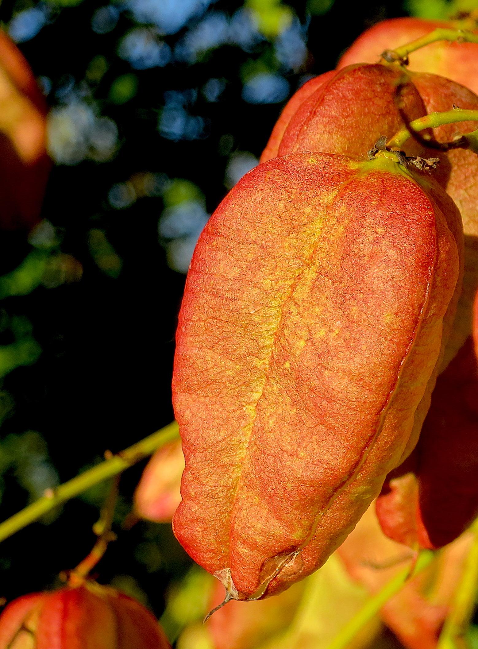 terrystree