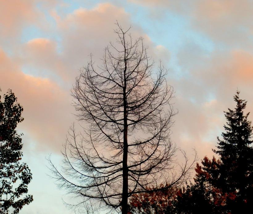 barefalltree