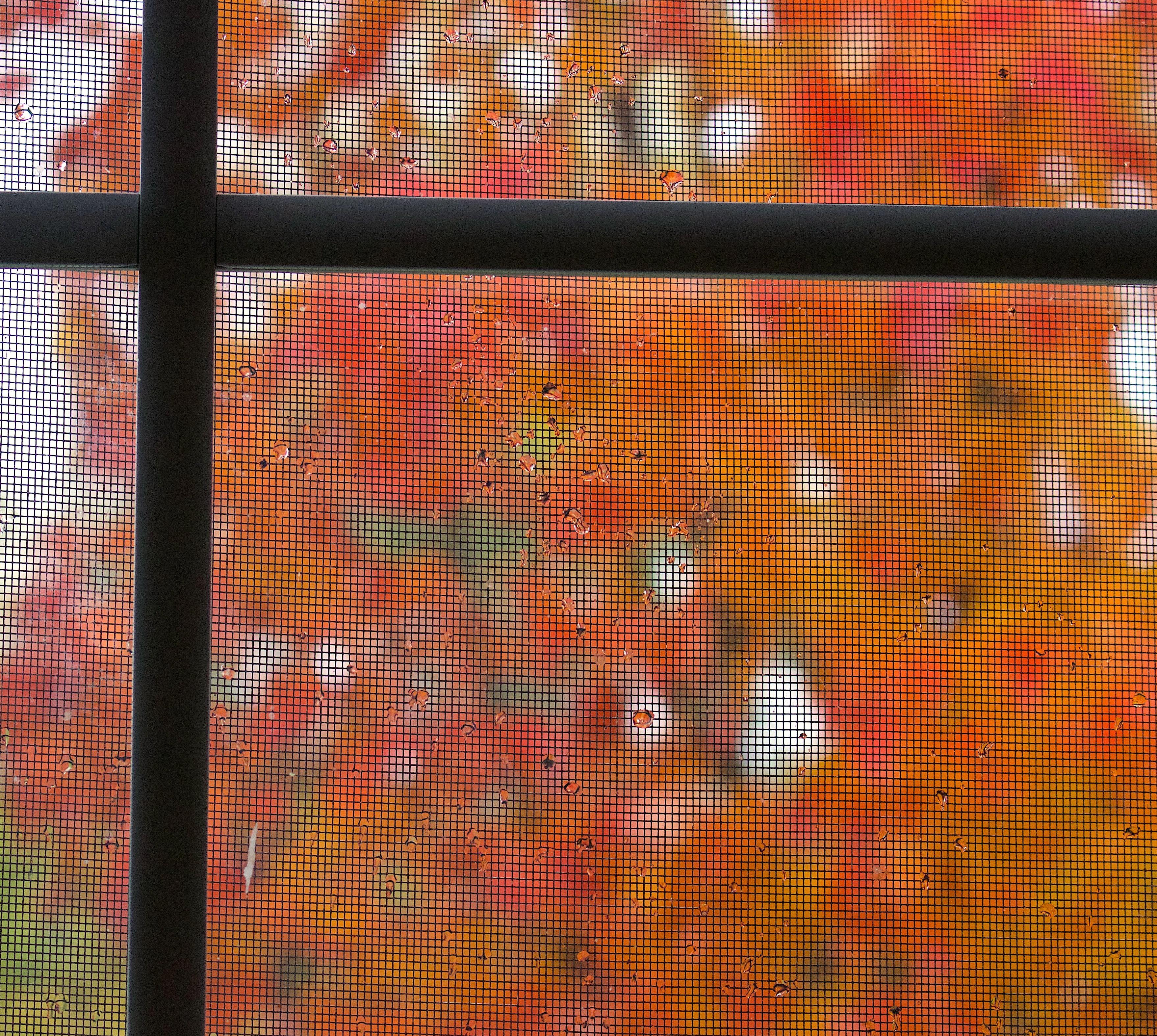 rainydaymaplescreen