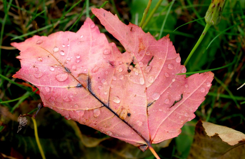 rainyleaf107171