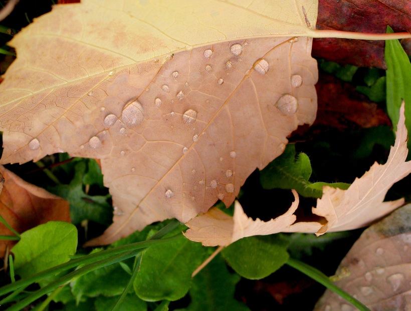 rainyleaf107172