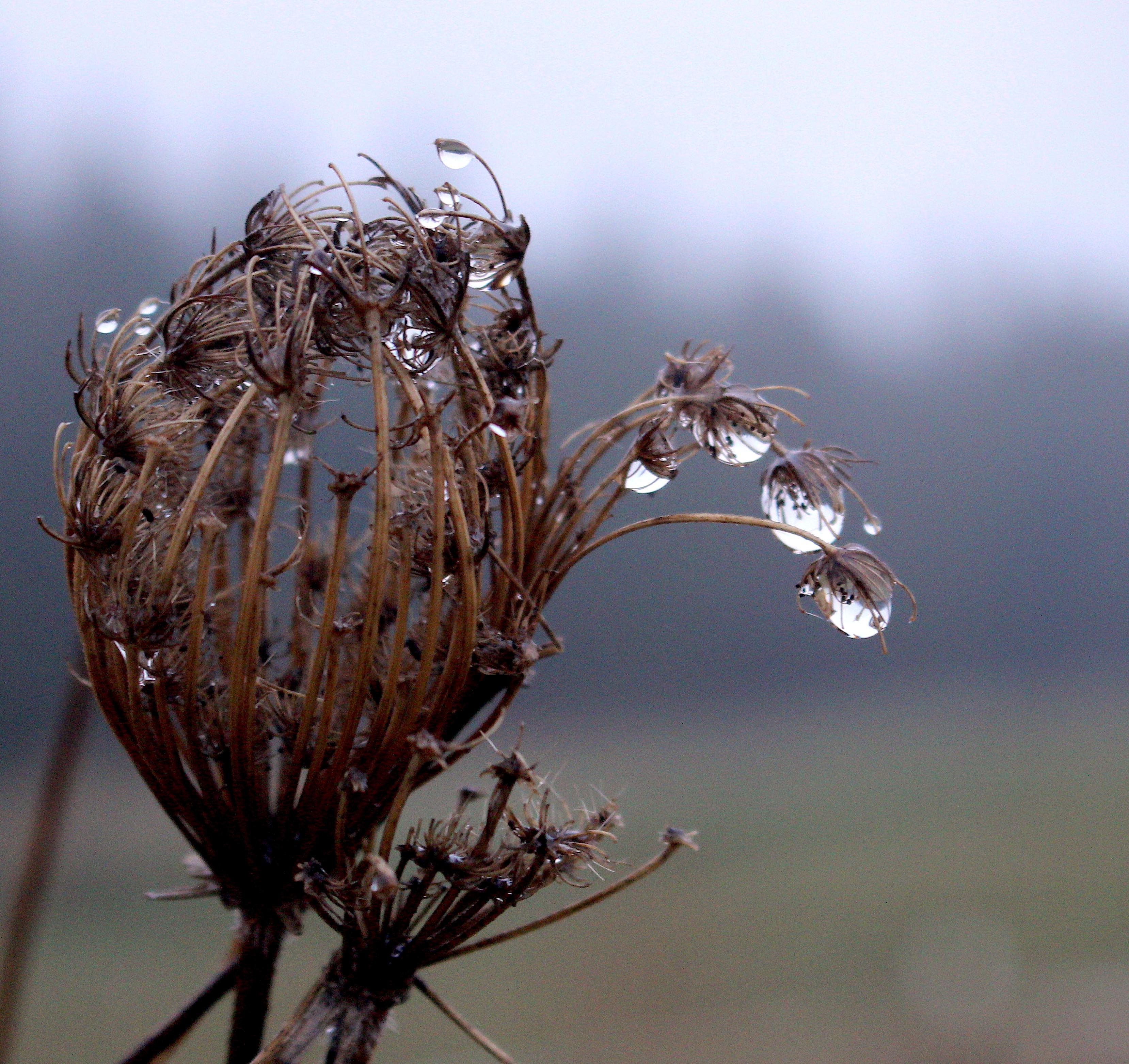 raindrops1217175