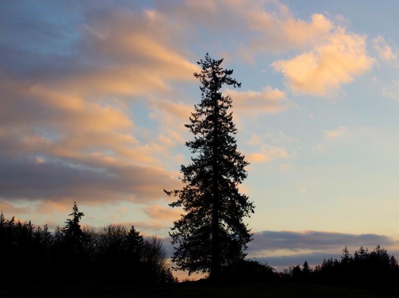 tree111017