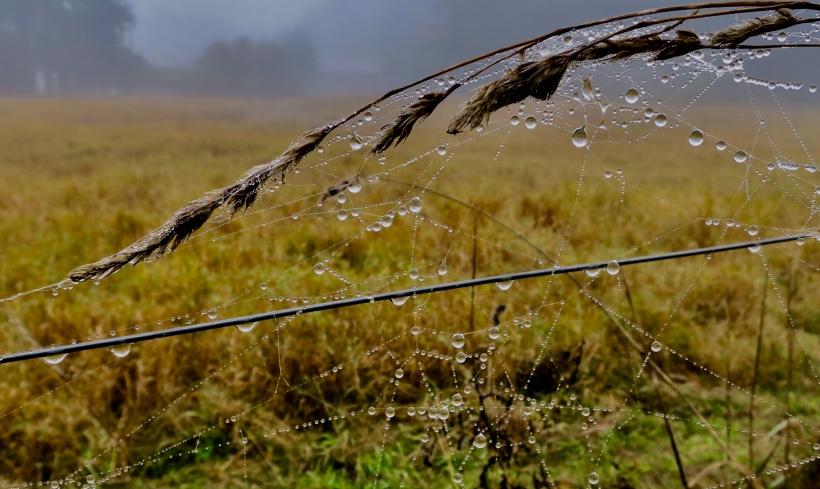 dropletswinter