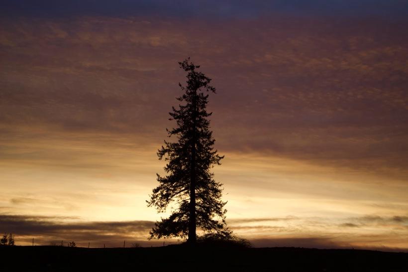 sunset113171