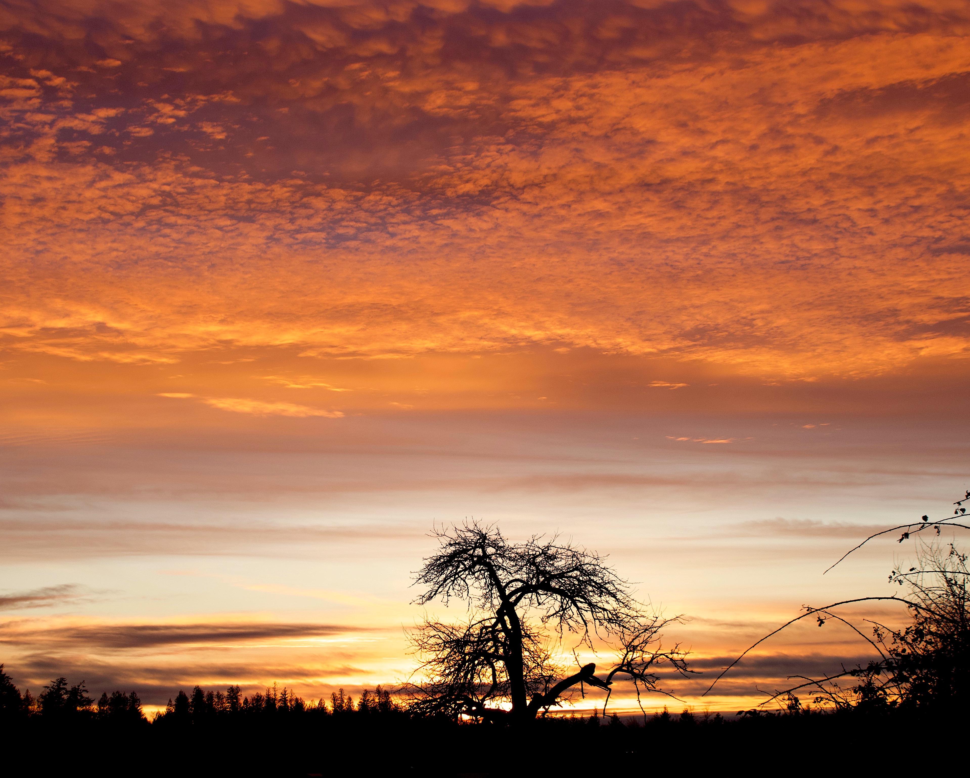 sunset1131817