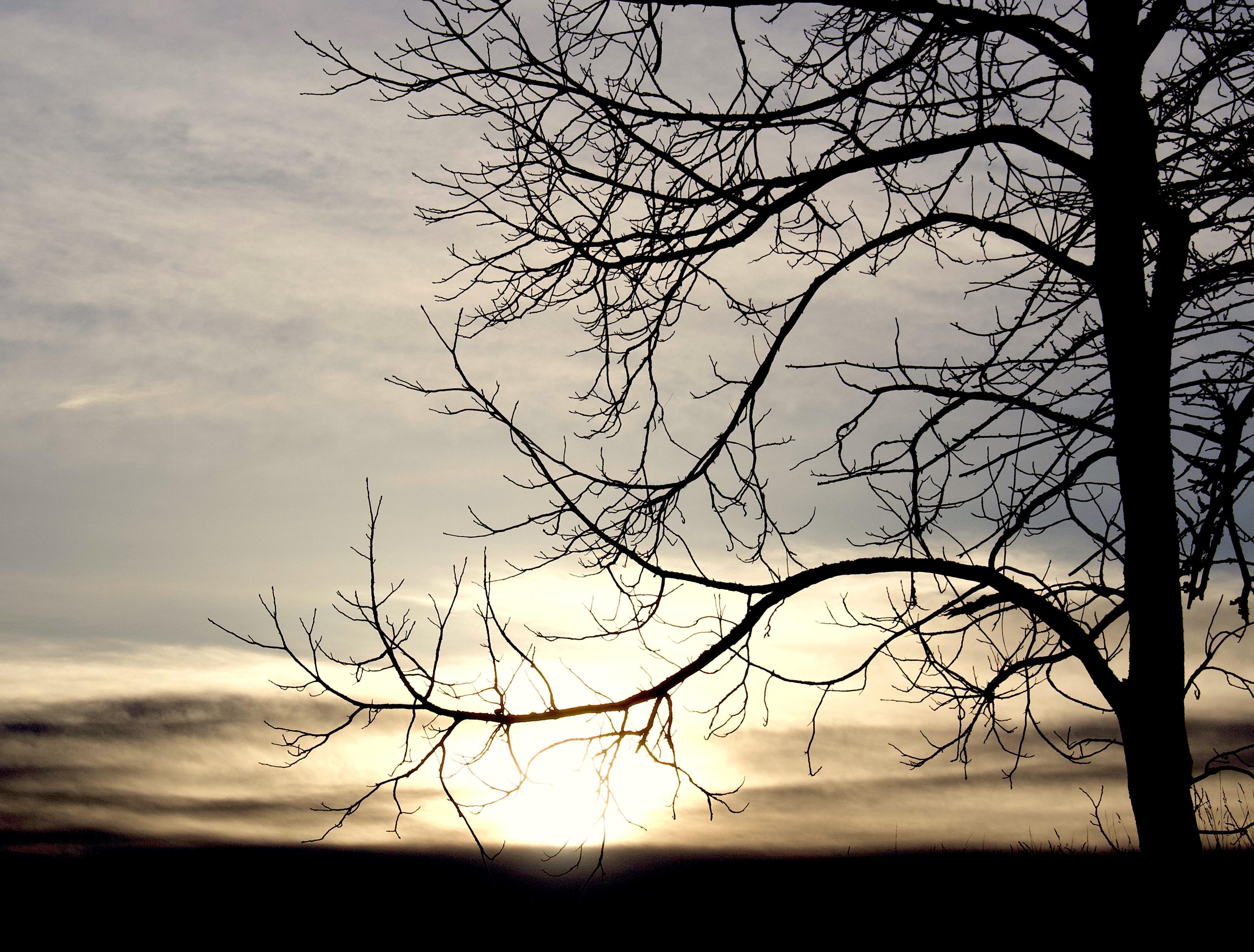 sunset115181