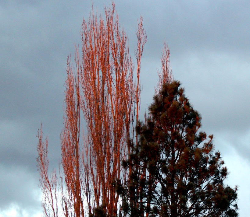 poplarfire