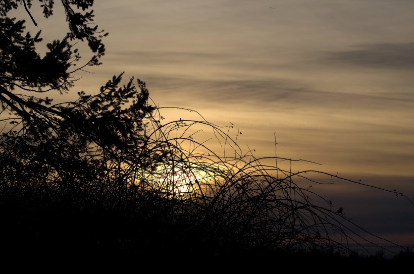 sunset210183