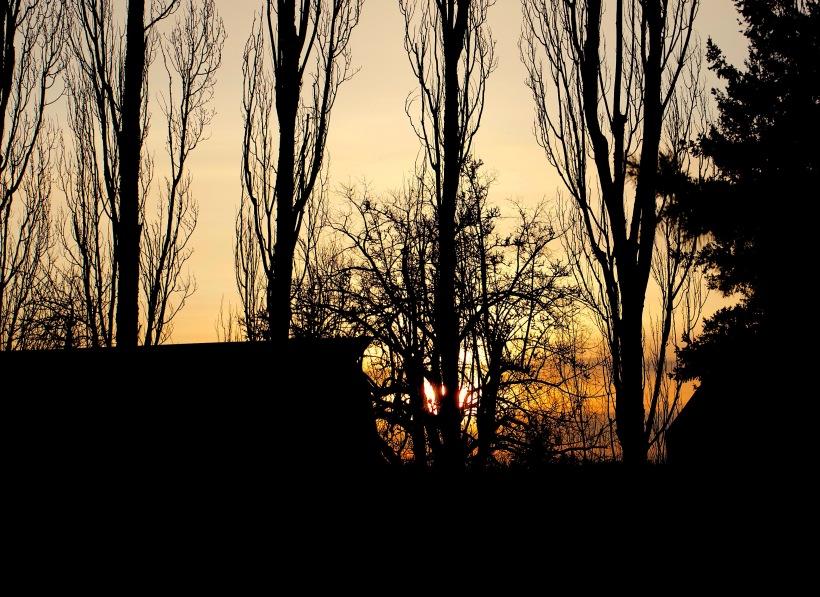 sunset219182