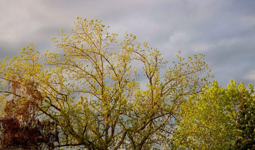 frontyardtrees