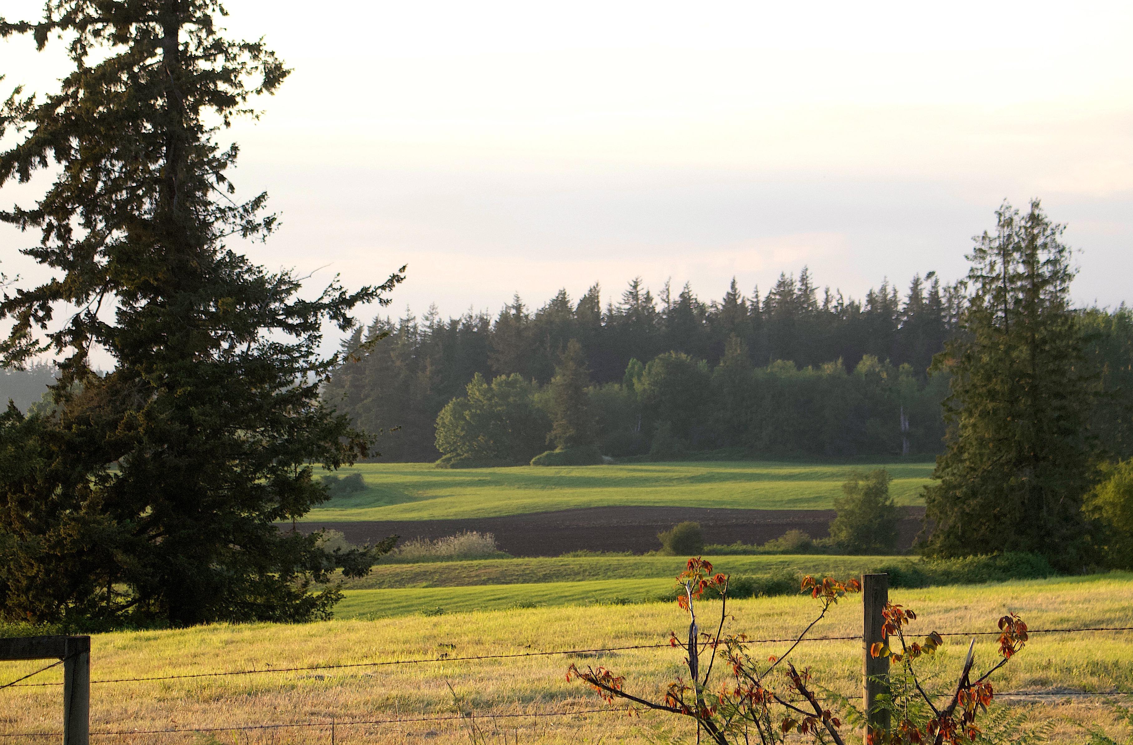 landscape517181