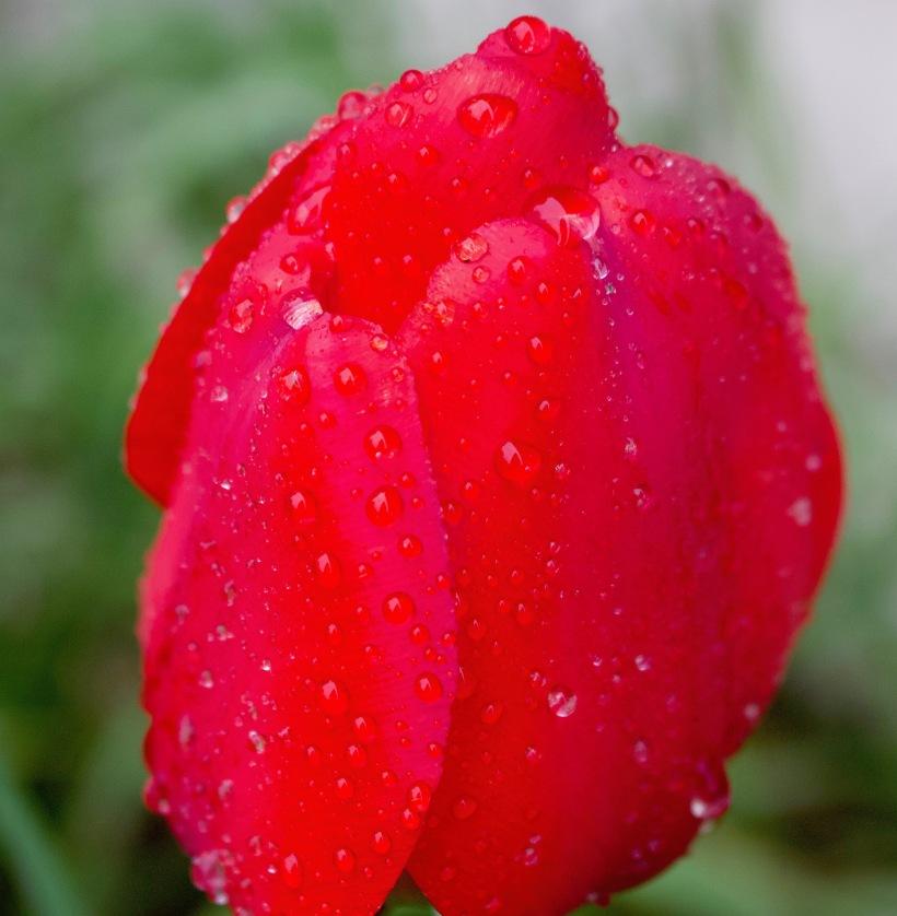 rainytulip4