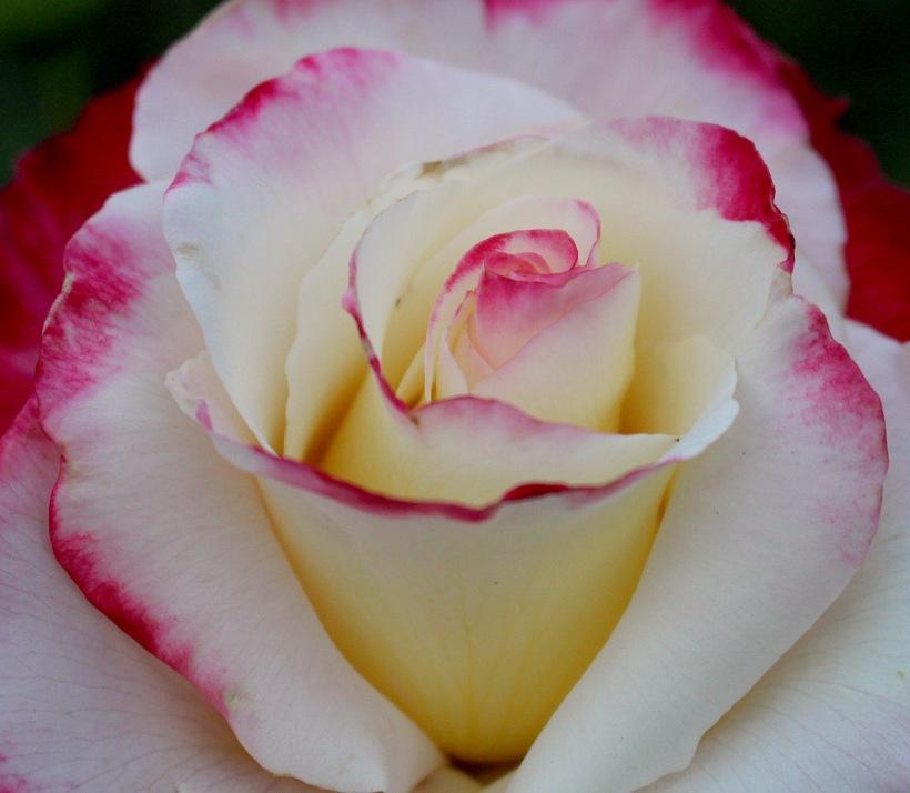 rosedepth