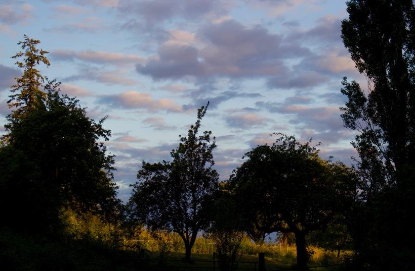 eveningorchard