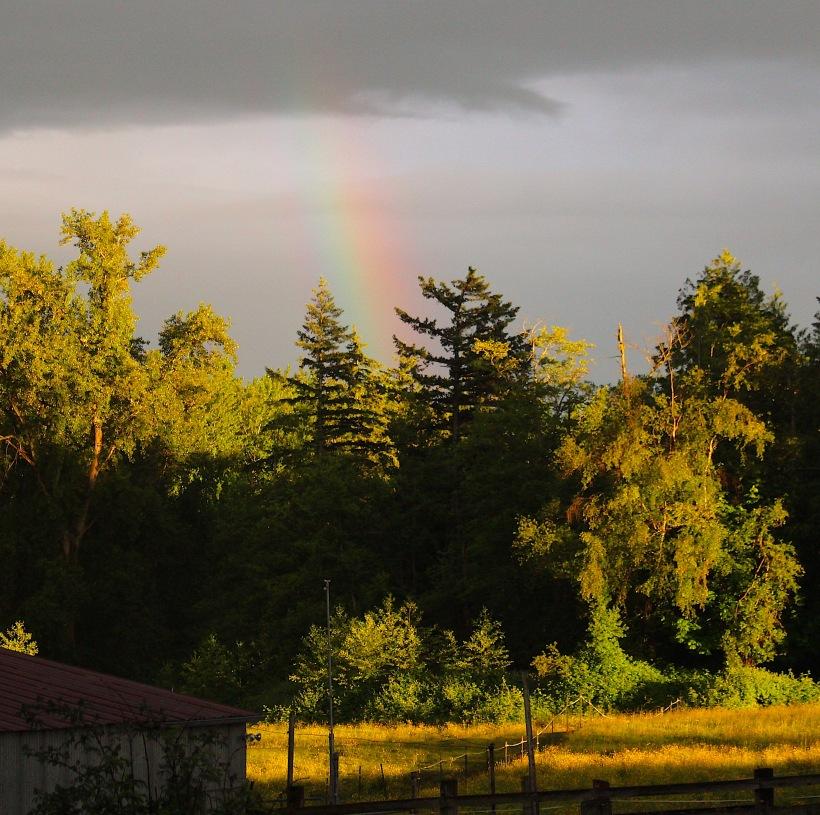 rainbowfields