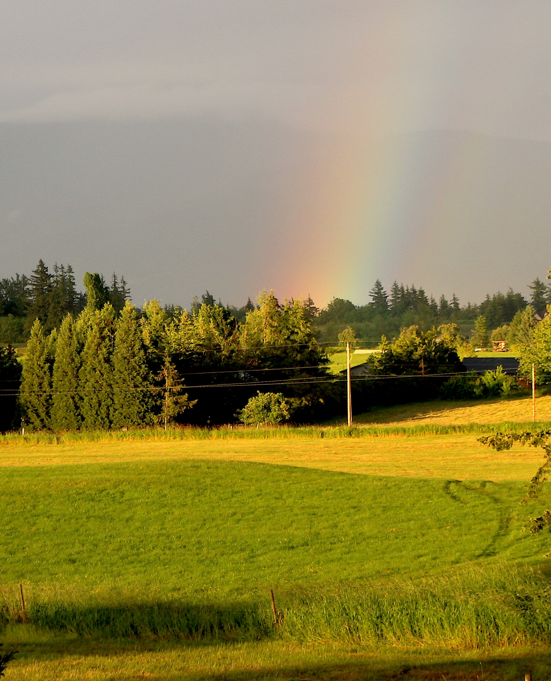 rainbowfields2