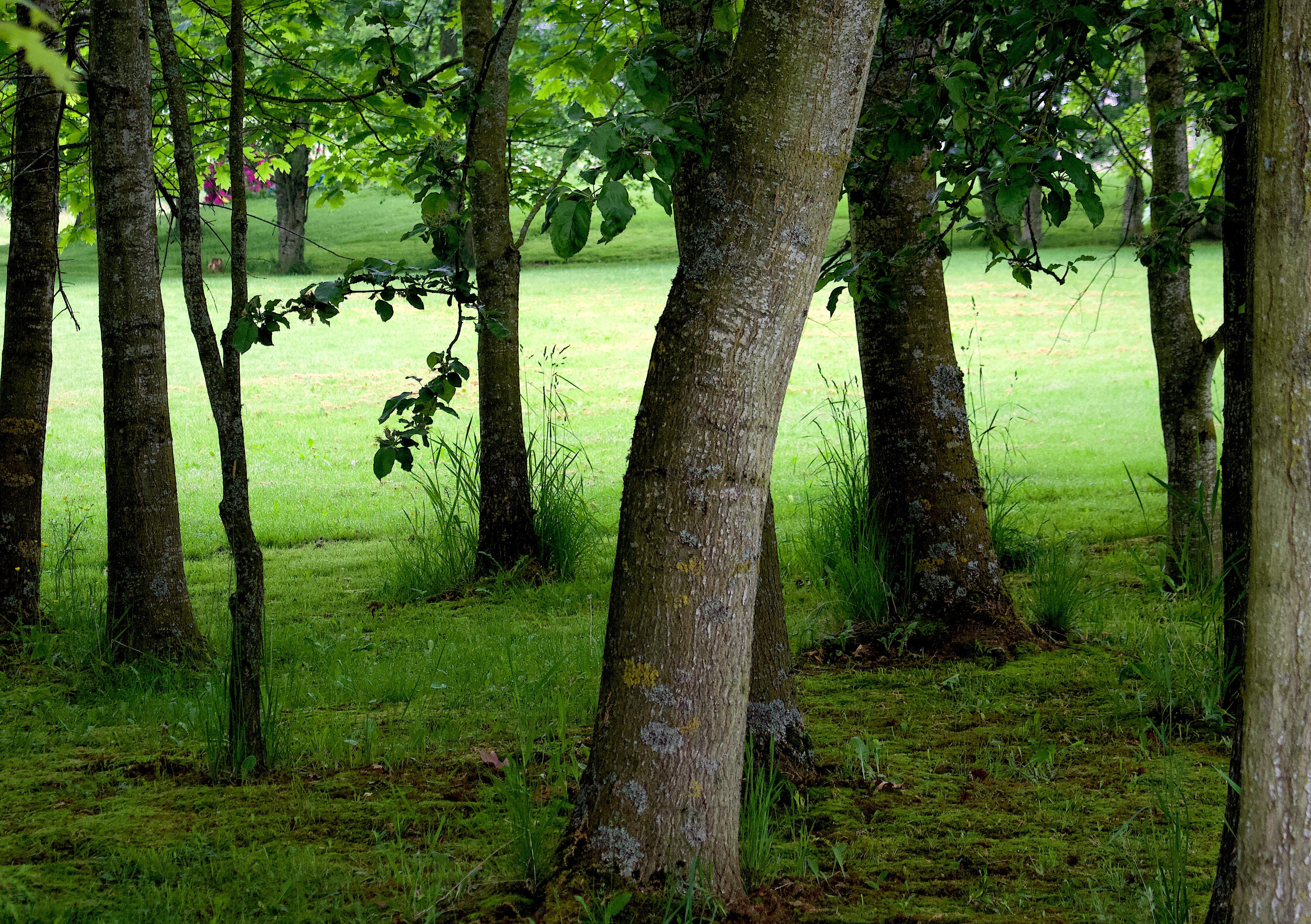 treegreen