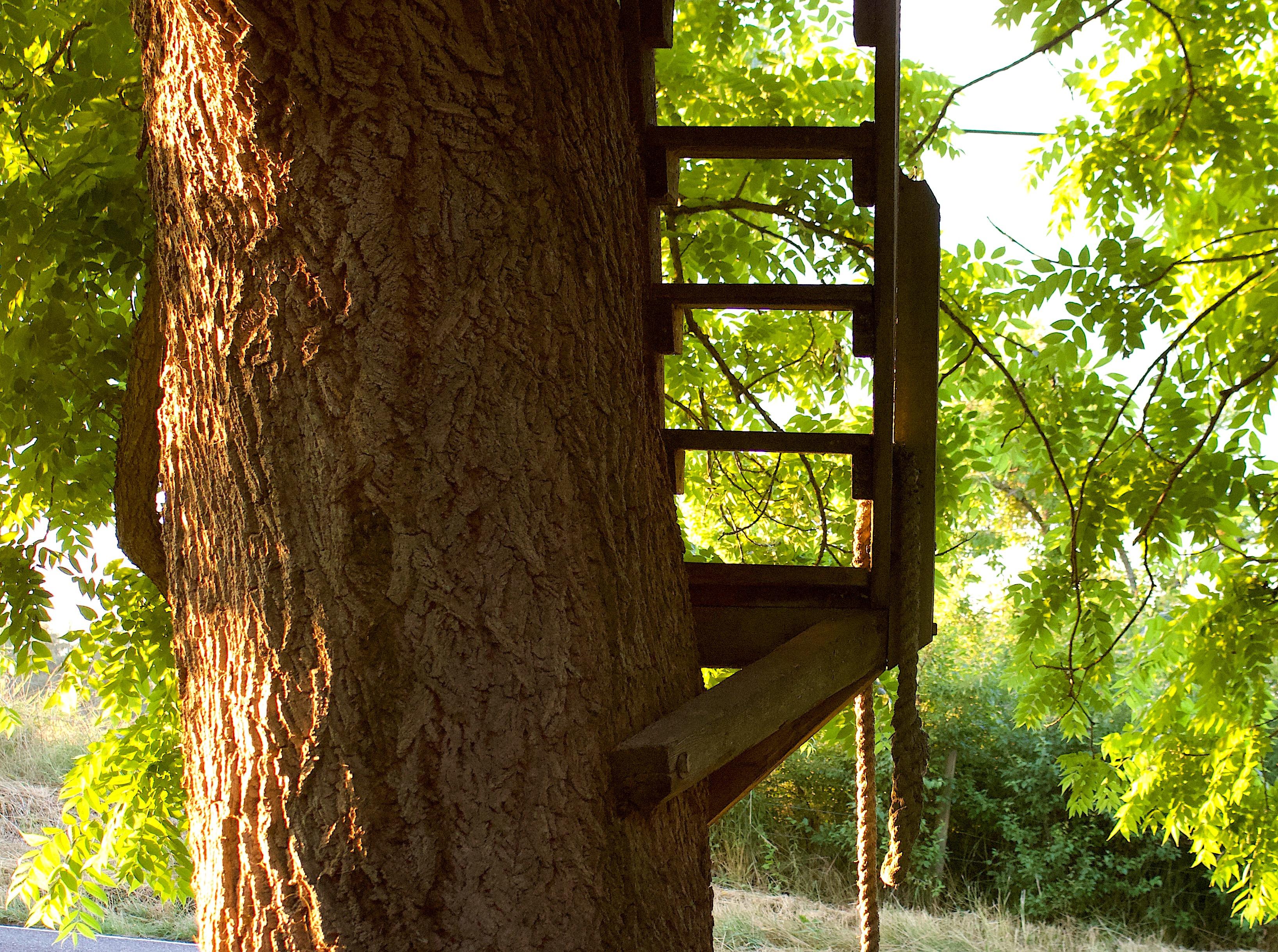ladderup