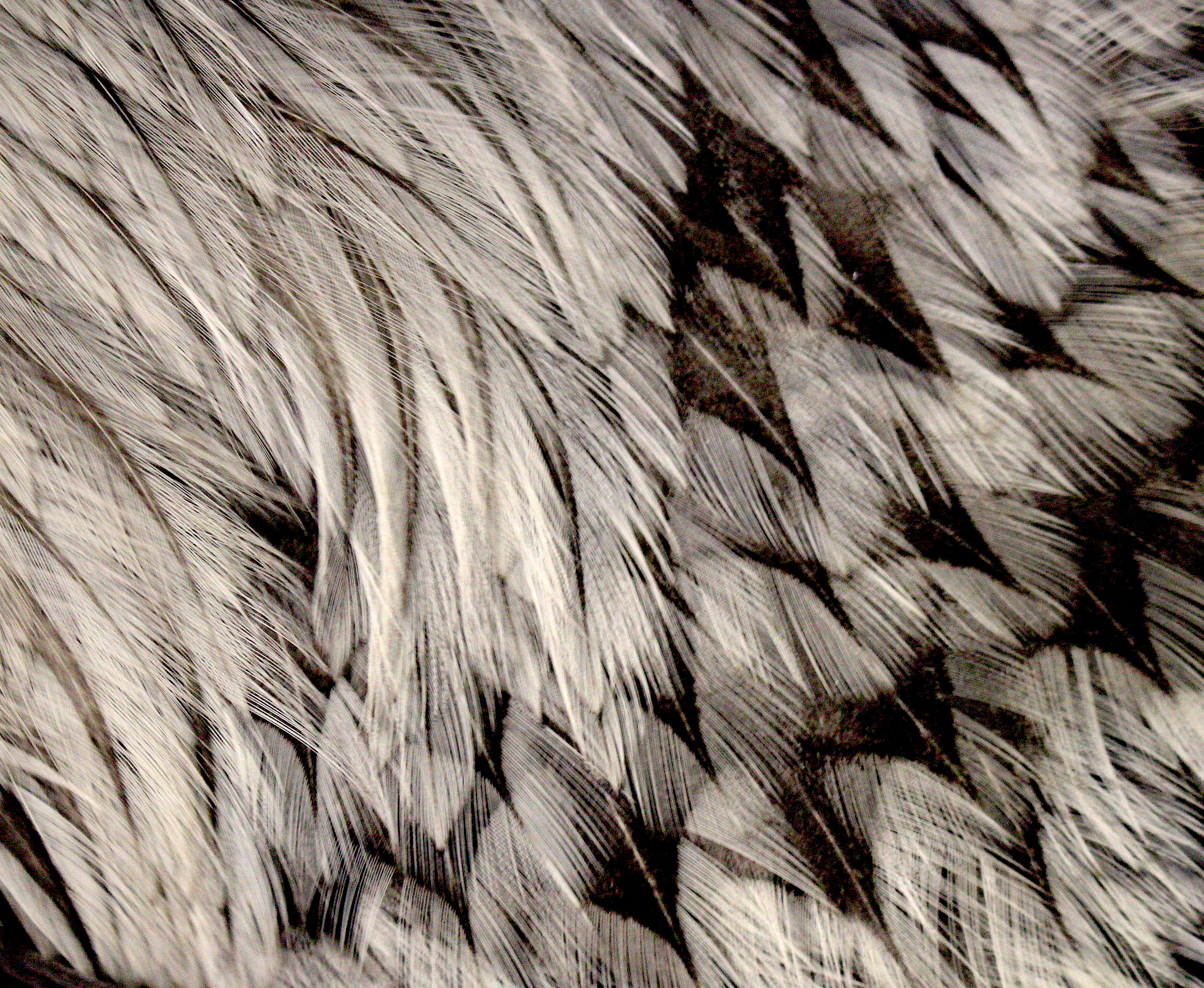 feather152018
