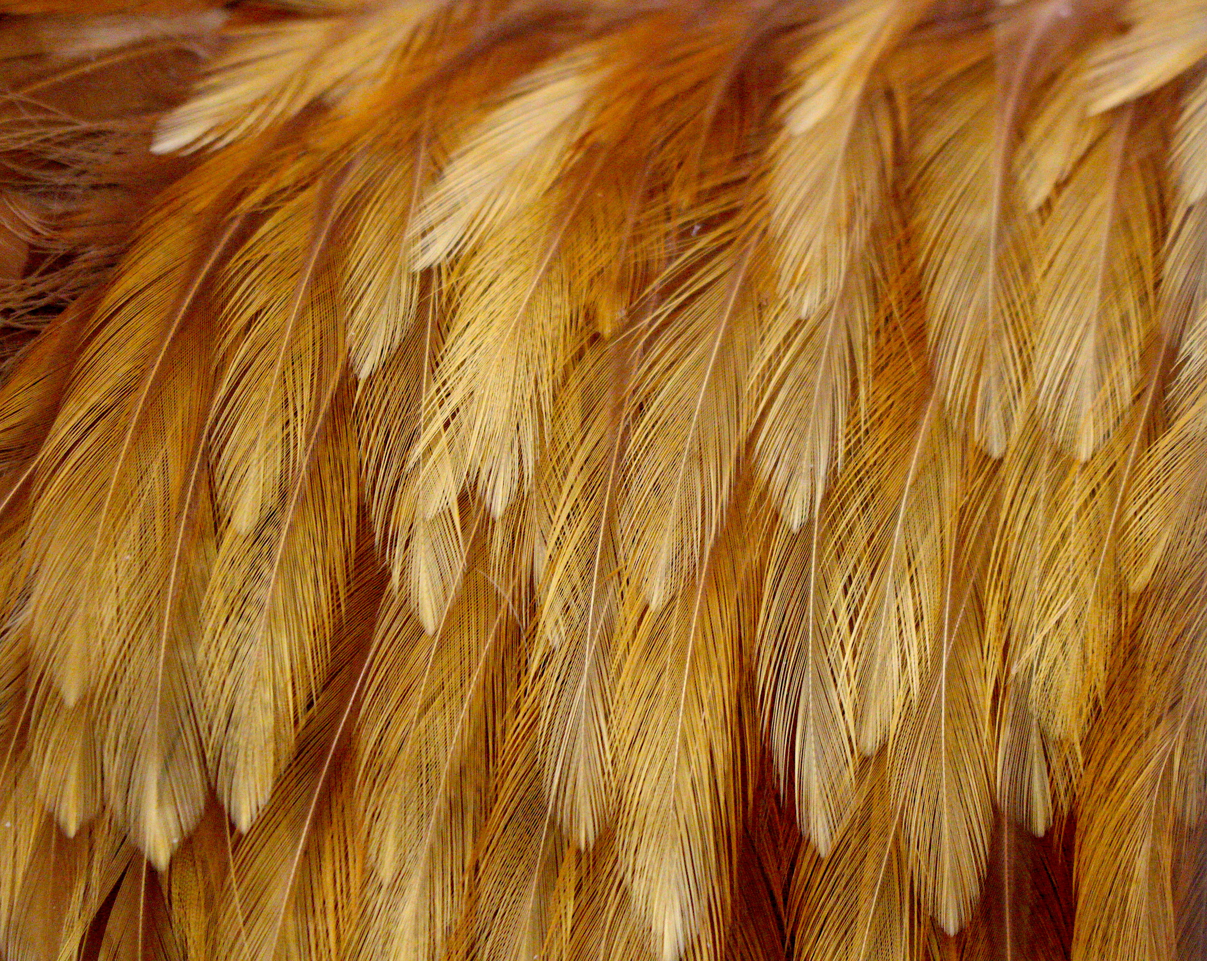 feather52018