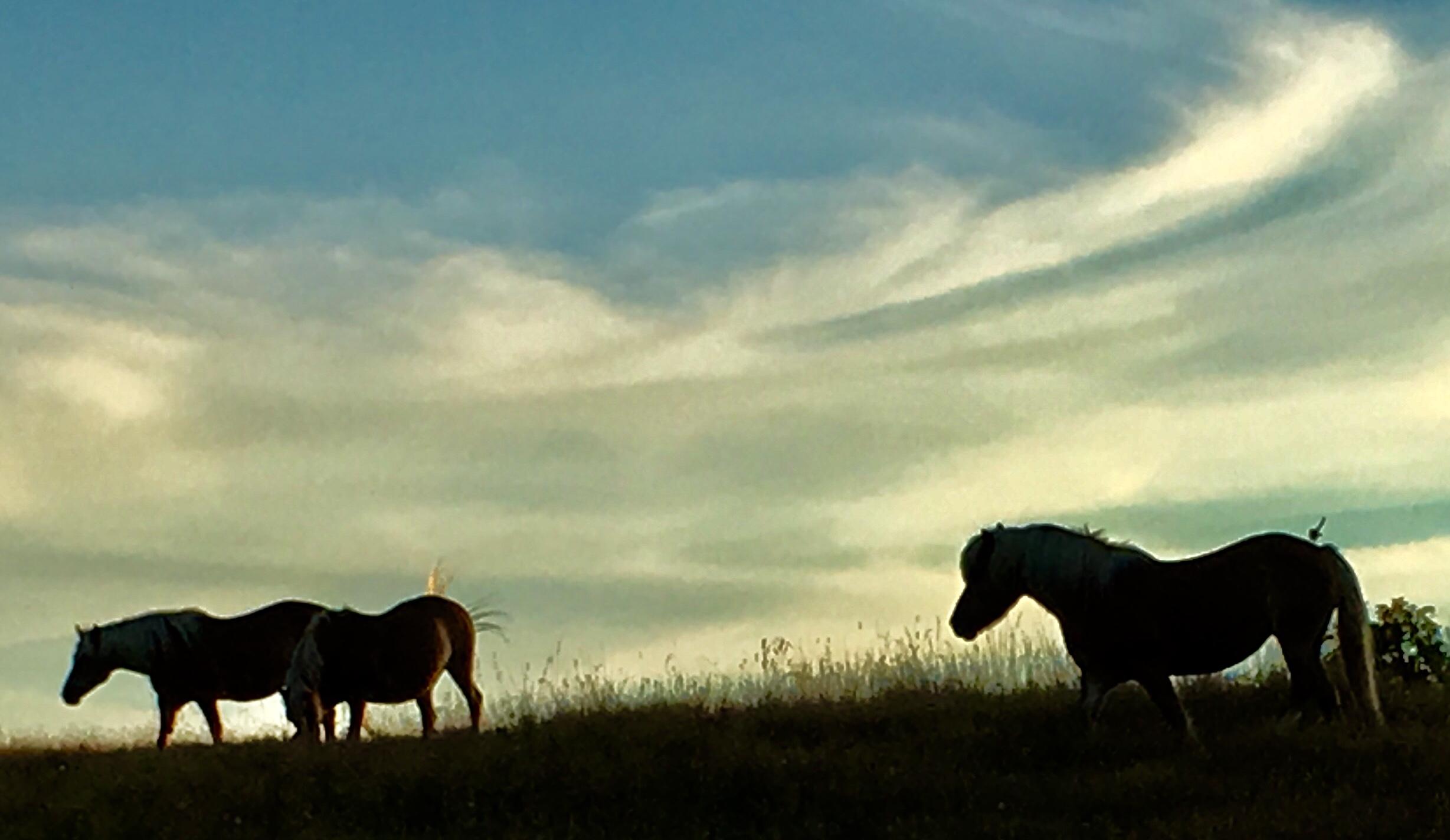 poniesaugust
