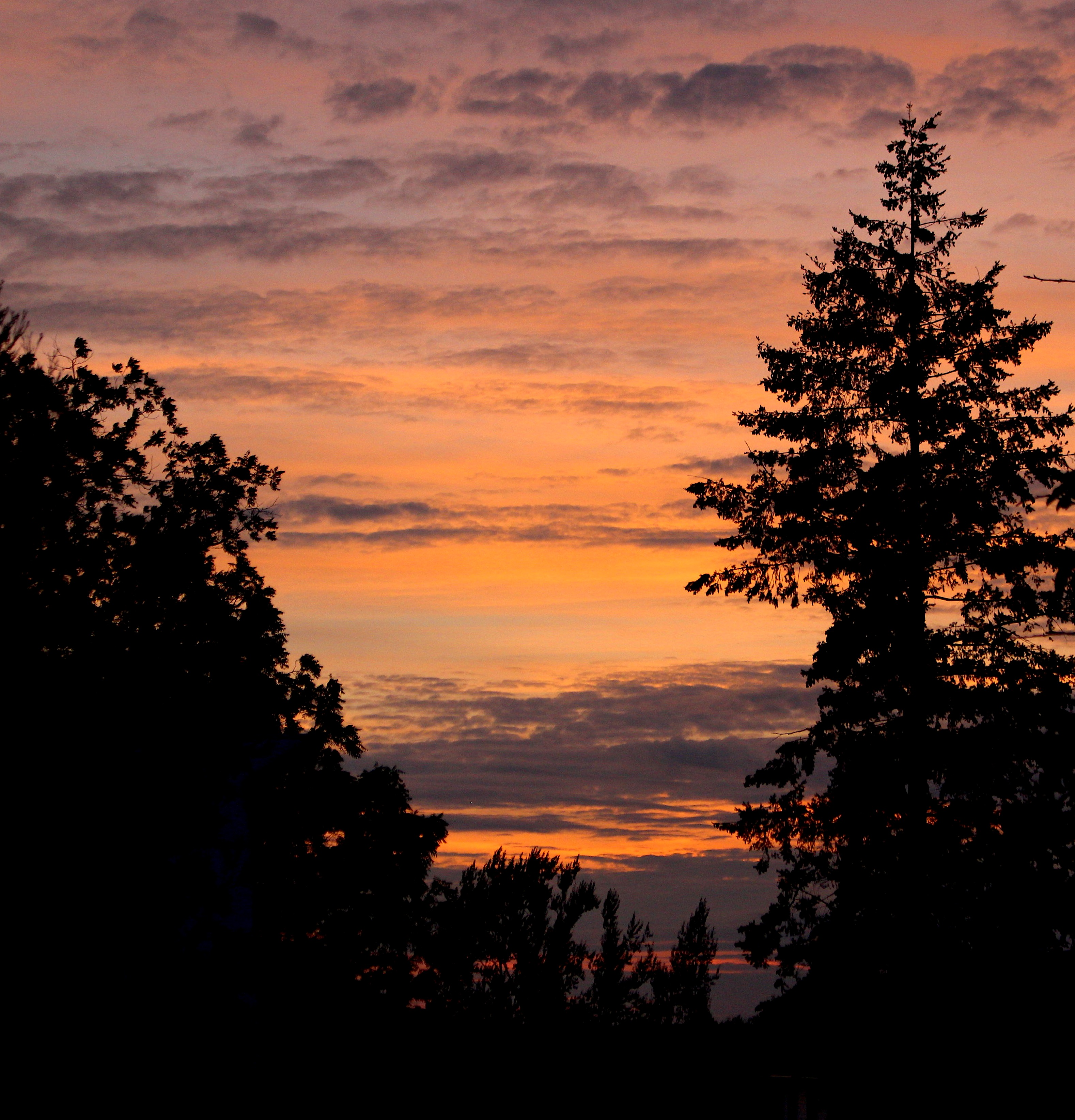 sunset831181