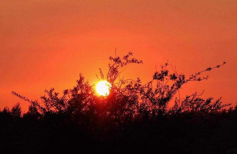 sunset88183
