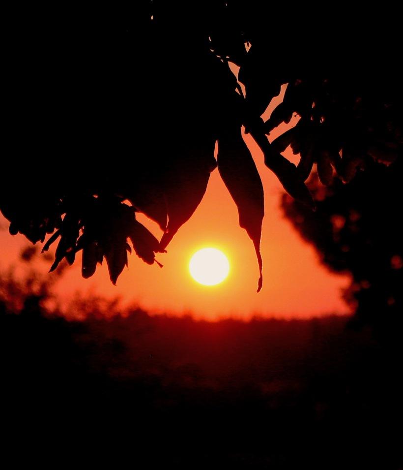 sunset88186