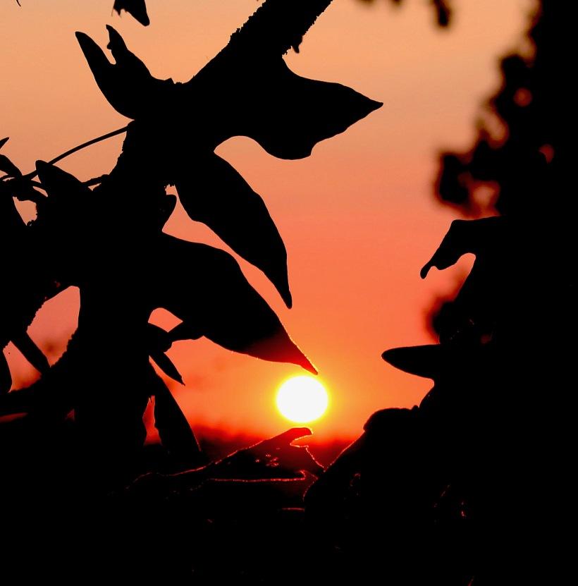 sunset88187