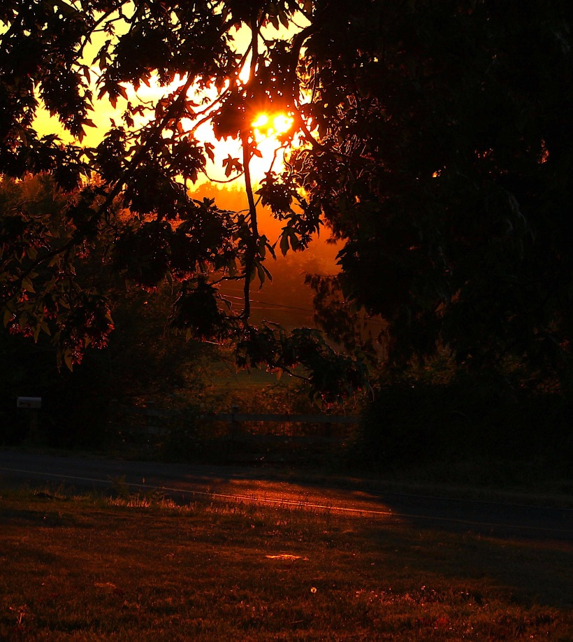 sunsetyard87182