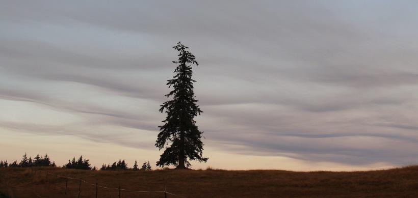treelayers2