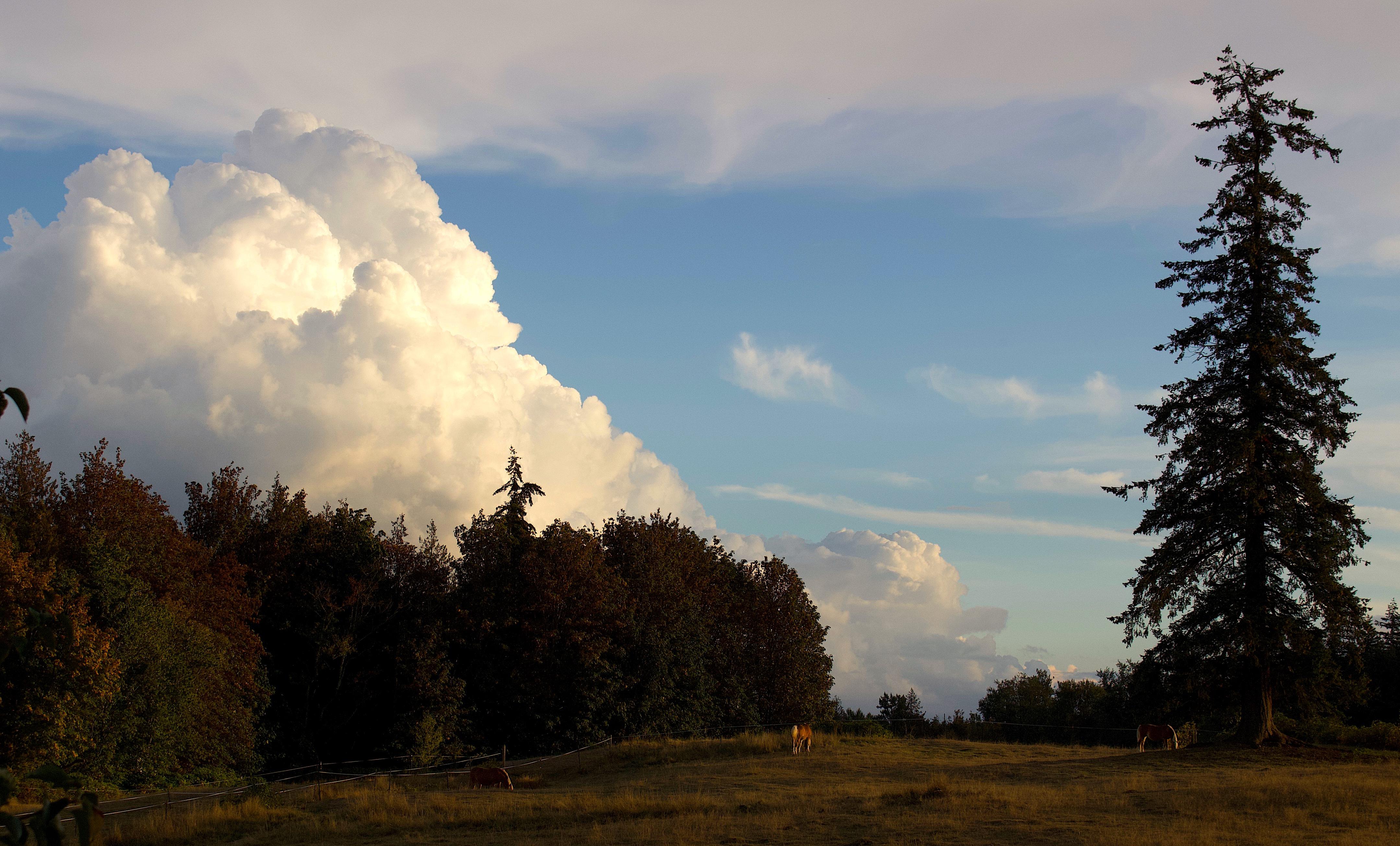 cloudsandponies