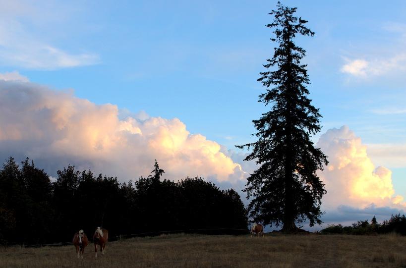 cloudsandponies2
