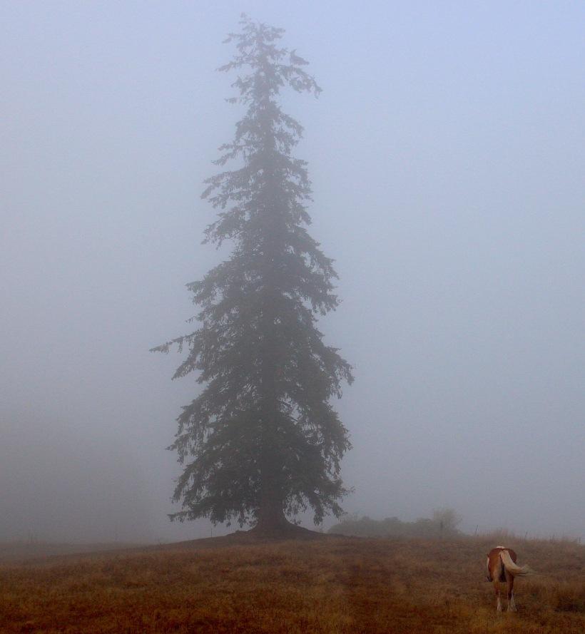 foggy827183