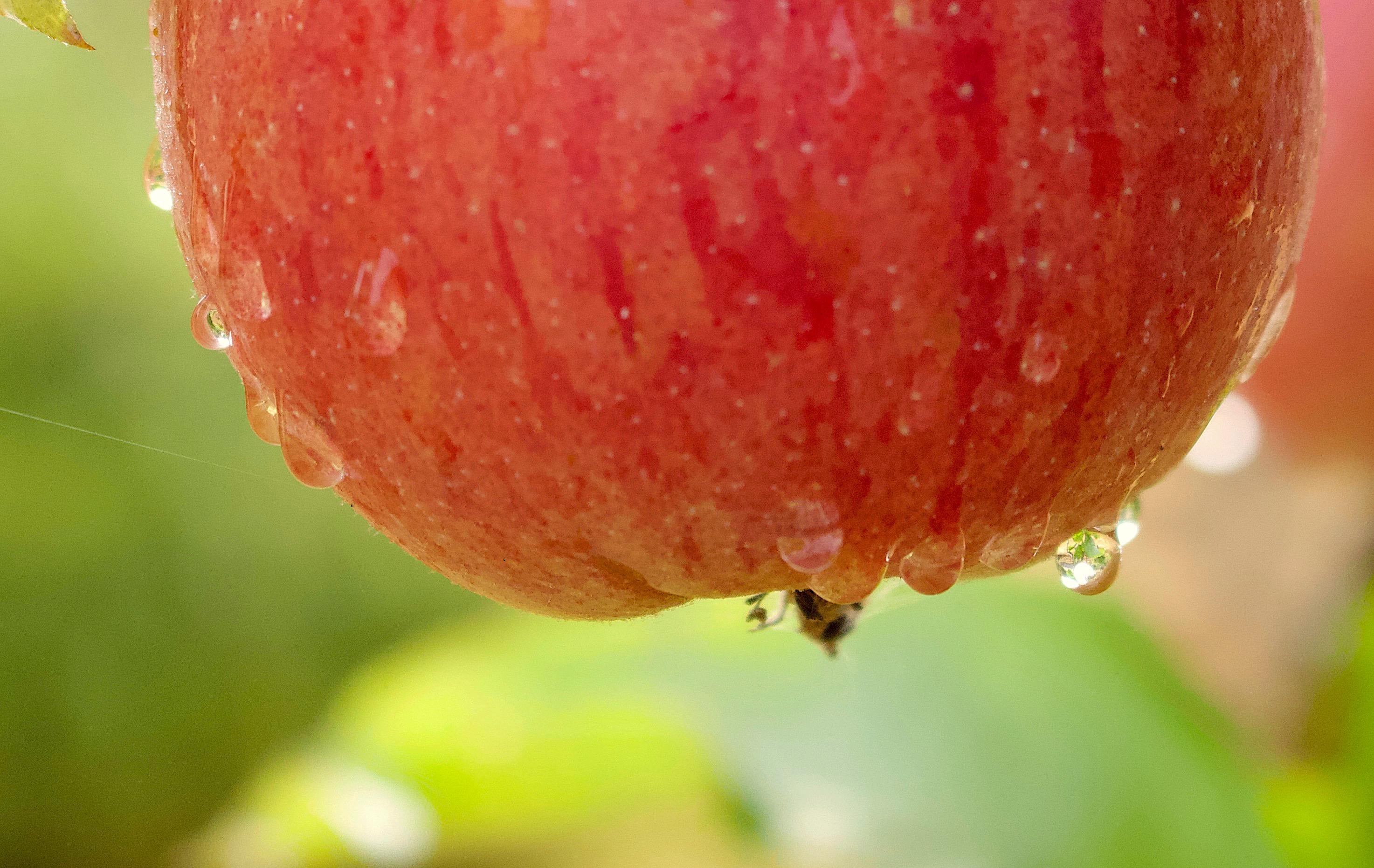 rainapple1