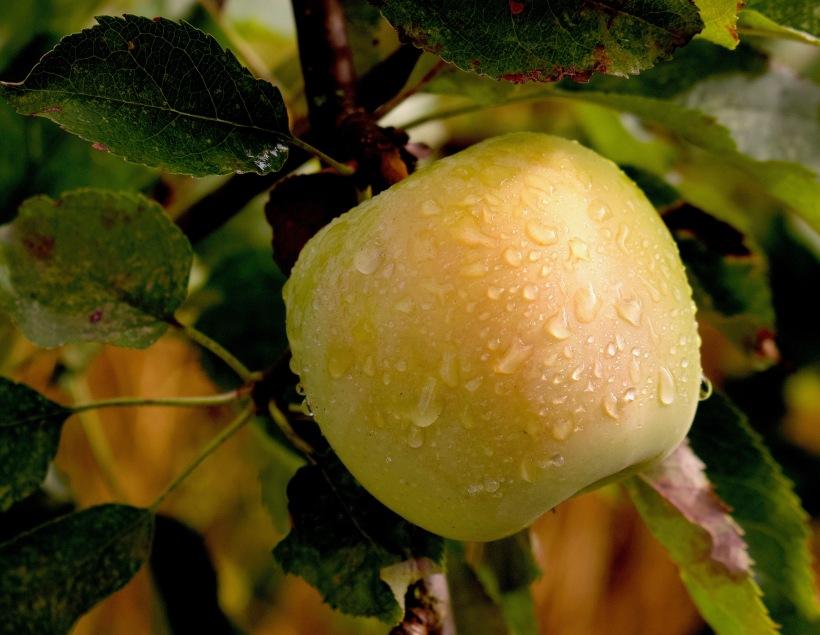 rainapple2
