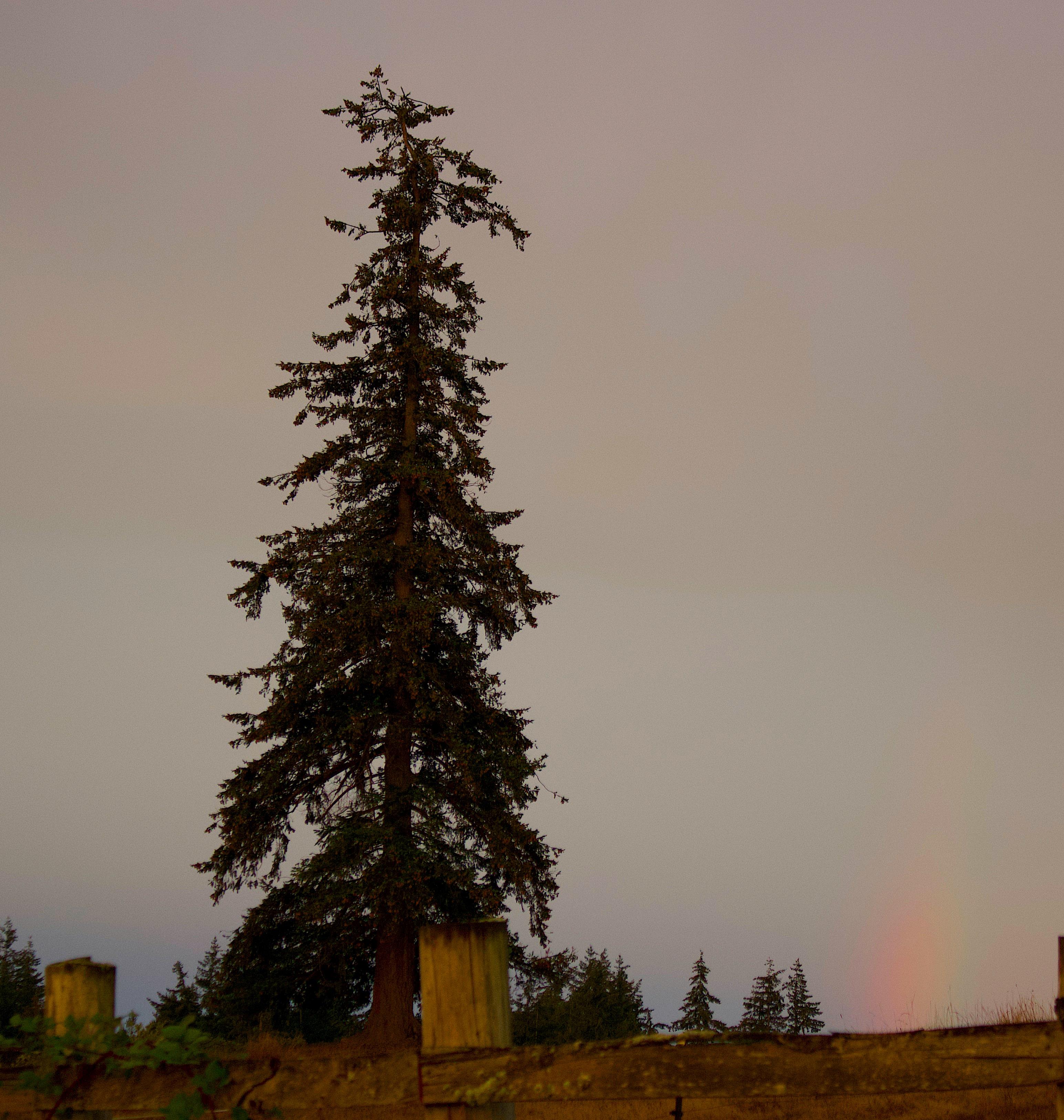 rainbowtree9918